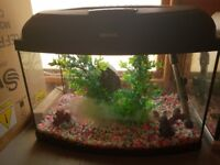 1ft curved front fish tank for small fish