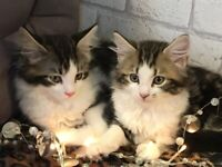Kitten boys
