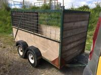 8x4 sheep trailer