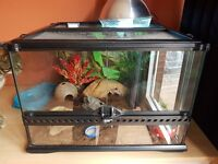 Leopard Gecko with Full Setup
