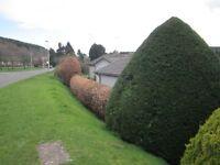 Gardener handyman, garden maintenance, lawn mowing, hedge cutting, minor tree work