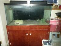 120 gallon WIDE fish tank