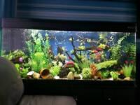 5 foot boyu aquarium