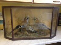 Taxidermy Birds two Jays and a Snow Bunting, glass display case, antique