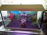 2ft fish tank 60 litres (full tropical set up)