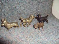 Brass dogs