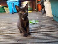 Lovely male cat