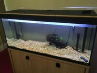 roma 240 ltr fish tank with 3d background
