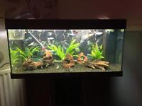 Juwel aquarium fish tank 180 ltr full set up including fish