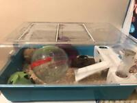 Selling hamster cage (blue)