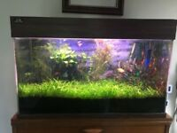 Complete freshwater aquarium - 22 Gallon - Live fish, all equipment - Cost to buy new £500+