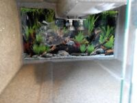 vivarium grey fibreglass with lighting bowls and unopened food
