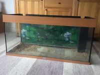 Sold pending collection 3ft jewel fish tank free local delivery £45 ono