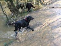 Allsorts Pet Services (Dog walker and Pet sitter)