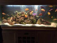 Aquarium fish tank, reptile tank, sideboard style.