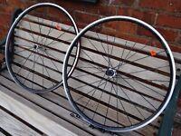 DT Swiss R23 Spline 11 speed 700c road wheels/wheelset - Campagnolo - new