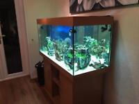 350L tropical fish tank
