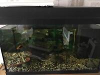 Aquarium/ tropical fish tank plus fish