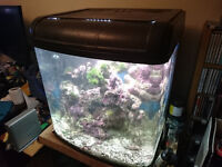 Fish Tanks and Lots of Kit, Live Rock, Test Kits, Interpet, River reef Clean up Crew