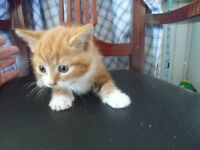 4 beautiful kittens for sale £40 each