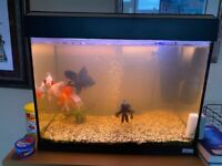 Complete large aquarium with pump filter lights blackmoor pandamoor fish