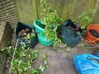 Garden plants/climbers