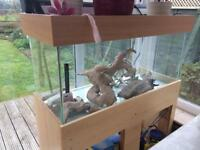 Fish tank and accessories (160Litre)