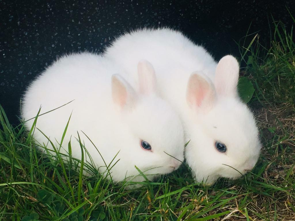 Craigslist Daytona Beach Florida >> Beautiful Baby Netherland Dwarf Rabbits In | Hot Girl HD ...