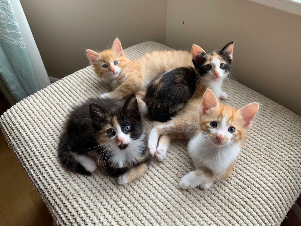 Kittens For Sale In South East London London Gumtree