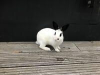 Free Adorable Bunnies!!