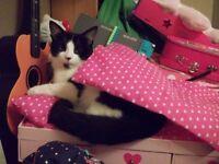 REWARD - Missing Cat - Black & White Male - Bermondsey
