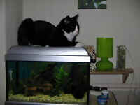 36 Litre Fishtank complete with accessories- heater,filter,gravel,light,ornaments