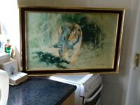 Two tiger pictures