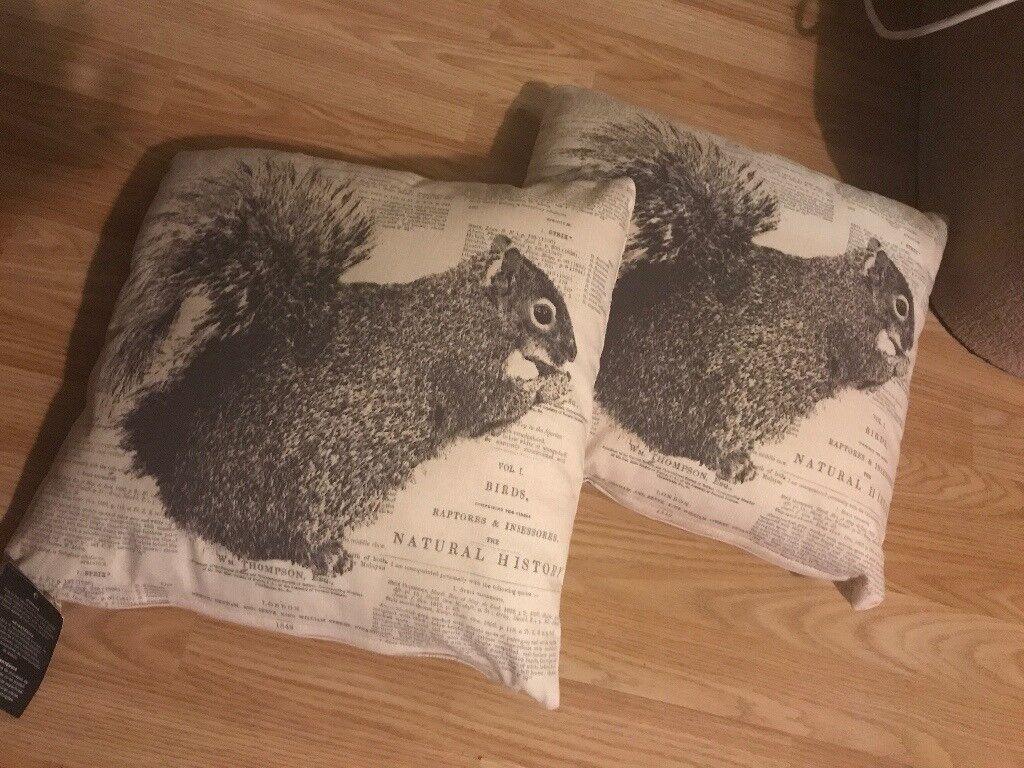 Squirrel cushions