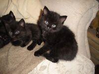 lovely kittens looking for cat loving home