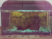Aquarium 59 x 29 x 29 cm. Comes with 12 fish and all accessories. All up and running and ex cond.