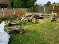 Free tre logs to be picked up