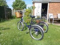 Pashley Adults Tricycle