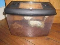 African land snails and tank