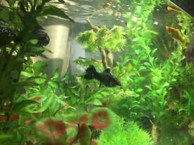 Aquarium 54L