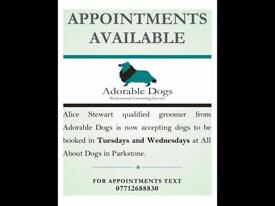 Eddies diy dogwash scotties dog grooming in leith edinburgh dog grooming solutioingenieria Images