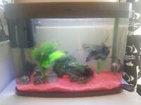 Black Moore Goldfish + Equipement
