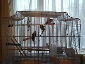 Budgies with cage