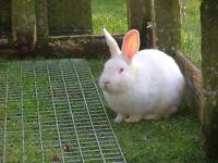 Free - Bunnies need new home