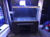 Fluval fish tank 300L