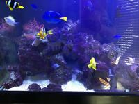 Aqua Reef 300 fish tank with all extras