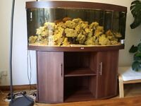 Juwel 1.5 m curved aquarium with all accessories and fish