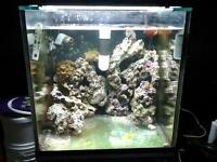 aquarium 24x24x24 a vendre , rack , decante