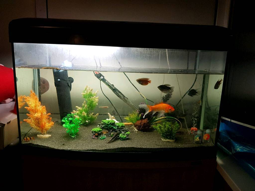Gut gemocht 150 litre fish tank with stand   in Plumstead, London   Gumtree LU93
