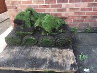 Fresh garden turf 5 rolls
